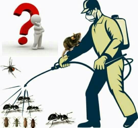 عيون زمزم لخدمات مكافحة الحشرات بق