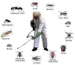 تنظيفات عامة 0558379555 مكافحة حشرات